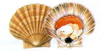 tipi di molluschi