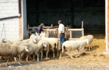 c32a15e49c I Pastori, La Transumanza e l'Abruzzo